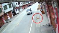 监控曝光偷狗贼作案:一人开车一人动手,整个过程仅用2秒