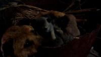 狗妈妈生了6只小宝宝,却被放在黑暗的角落喂养,是谁的错