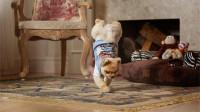 地震前因为狗狗的异常举动,救了一屋子的人!监控录下全过程