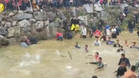 上千人下水抓鱼 2000多斤鱼水中疯狂跳跃