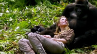 黑猩猩为撩妹,抛弃自己的同伴,机智的做法叫人佩服!