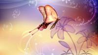 十二星座代表的最美蝴蝶是哪种?天秤座果然最美!