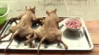 为什么中国人不吃猫肉?为什么越南人却对吃猫肉情有独钟?