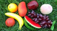 认识西瓜等8种美味水果,乐宝识水果