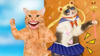 如何把猫咪变成美少女战士!