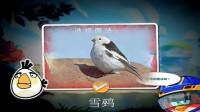 愤怒的小鸟2游戏【591】白公主是雪鹀吗?