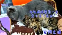 新来的小流浪猫粘上家里的胖公猫,听到猫主人表扬,两只猫一起翻白眼,太逗了