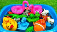介绍水族馆的动物玩具