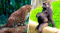 """8种你从没见过的动物""""孕妇"""""""
