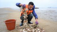 阿烽终于盼到大潮水,螃蟹抓到一大桶,八个人围着都吃不完