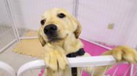 狗狗每天要吃多少?不同年龄段的狗狗是不一样的,可别喂错了!