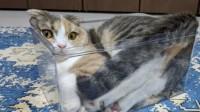 """猫是固体还是液体疑惑百年,法国科学家研究,荣获""""搞笑""""诺贝尔!"""