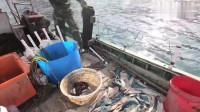 户外赶海:大叔收海鳗笼抓到只不知道叫什么的螃蟹,居然这么红!