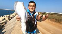 小伙赶海捡海螺,不料抓到条大墨鱼,这得有好几斤了