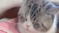 都说猫咪的眼睛里是星辰大海,我家的猫是什么?