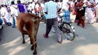 这是印度城市的商业步行街,感觉像中国的哪个年代?