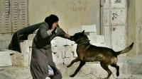 为何农村的老人都说,咬过主人的狗要被打死?否则后果更严重