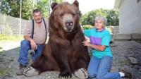 """外国夫妇养了一只棕熊,23年后,却没有一点""""熊样"""""""