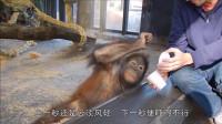 魔术师给猴子变魔术,猴子的反应太逗了,网友:好演员!