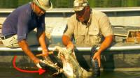 国外鳄鱼泛滥,看看老外是如何狩猎的,鳄鱼毫无抵抗之力