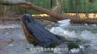 """世界上最""""倒霉""""的鳄鱼,嘴巴竟被水冻住了,网友:哥们儿,挺住啊!"""