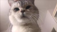猫咪每天起来都会看看铲屎官挂了没,这是什么心态?