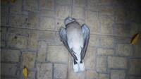 为什么鸟的寿命不长,却很难见到鸟的尸体?原因没那么简单