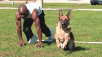 人和狗比赛骑跑,猜猜谁反应更快?高清摄像头记录全过程!