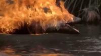 巨蟒被油桶爆炸点燃全身,急忙爬到水中,烧烤的蟒蛇有点帅!