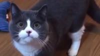 听说猫肉很好吃,猫咪的反应绝了