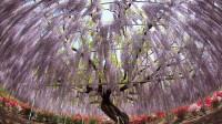 """世界上最""""珍贵""""的3棵树,年代久远,中国就有一棵,价值1亿"""
