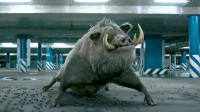 小伙拥有动物血脉,一旦遇到危险,就会变身成几百斤的野猪王!
