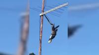 """大蟒蛇的""""神操作"""":身体倒挂在电线上,仍成功偷袭喜鹊"""