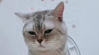 一只会用马桶的猫咪,这能为主人省了不少猫砂钱吧
