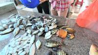 老四花400块 买烂虾网,抓一大筐新鲜鱼,老婆在市场 等着数钱