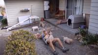 一群小奶狗冲进家门,直接把男主人扑倒在地上了,真是没谁了