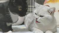 这世道,连母猫都会宠男朋友!网友:这样的女朋友哪里领