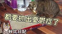 原来一样是猫抓板也有不喜欢的 秋比日记(53)