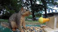 老外测试松鼠在危险和美食面前会选择什么?镜头记录下搞笑过程!