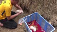 母狗帶著一窩小奶狗躲在稻草里生活,餓壞了也不肯跟我回家!