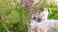 小猫小兔好可爱