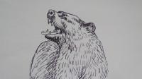 速写黑熊窦老师教画画