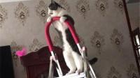 猫咪:你别担心我摔不下来,这灯泡,我不换,你换啊?