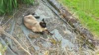 猫咪捕一只兔子回家,当见主人撒口就跑,猎物跑出屋外结局搞笑了