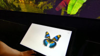蝴蝶的神奇世界,奥克兰博物馆展览