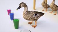 宝宝早教益智动画看小鸭子喝饮料生蛋,认颜色