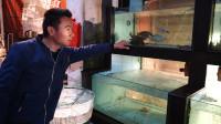 阿烽到底有没有在吹牛?一只螃蟹170块,黑鲷一斤110元