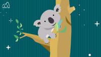 考拉又叫树袋熊、无尾熊,它到底是不是熊?