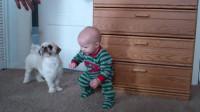 萌娃正在认真学习走路,一旁狗子的反应,太搞笑了