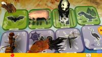 认识蚂蚁等8种昆虫动物02-宝宝识动物学拼音汉字 识果蔬动物 亲子早教儿歌舞蹈